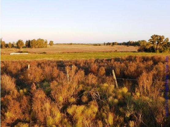 45hás. agrícola ganadero arroyo