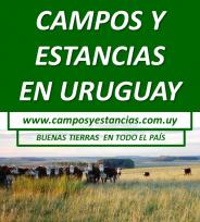 Campos y Estancias en Uruguay