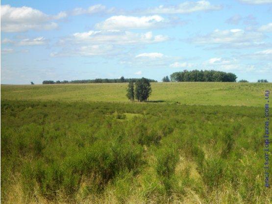 Campo 11 hectareas en Florida