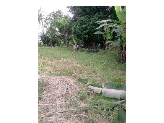 GANGA Terreno en Bugaba, Chiriqui, Panama