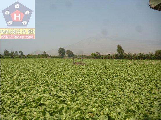 VENDO TERRENO AGRICOLA EN CHICLAYO, PERU