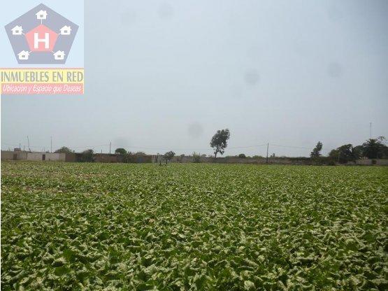 VENTA DE TERRENO AGRICOLA EN CHEPEN, PERU
