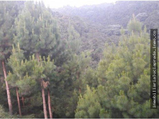 Venta Finca Forestal Villamaría, Manizales