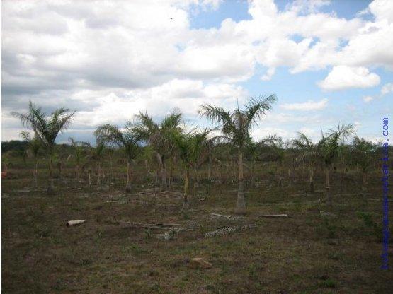 19 hectareas Liberia Guanacaste