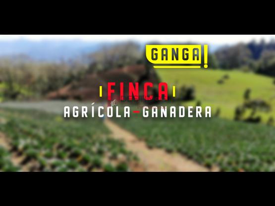 Venta de Finca Agrícola - Ganadera en Cartago