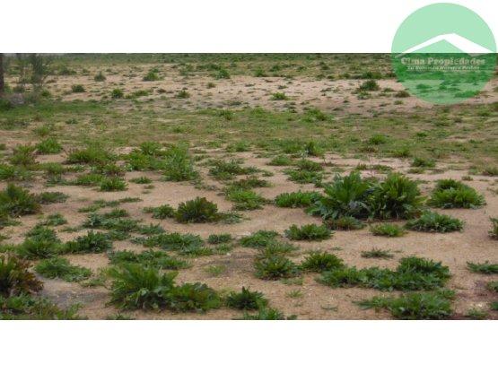 Terrenos para Proyecto Habitacional