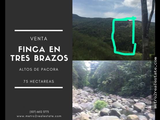 VENTA DE FINCA EN ALTOS DE PACORA. Chepo