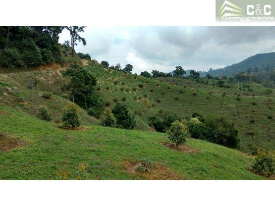 Finca en venta en Pijao, Quindio 4498