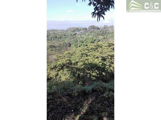 Finca en Venta en Hojas Anchas 4537