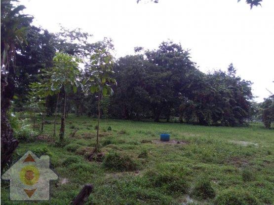 Finca Agrícola en San Isidro de Upala