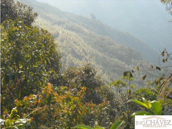 Finca Ecológica, Alta Verapaz