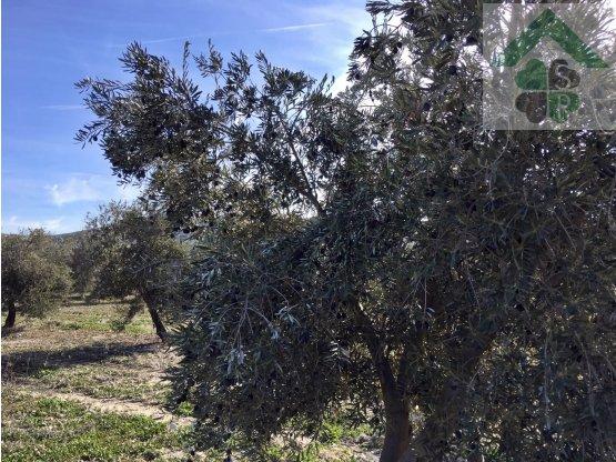 Finca de olivos en venta en Dehesas de Guadix