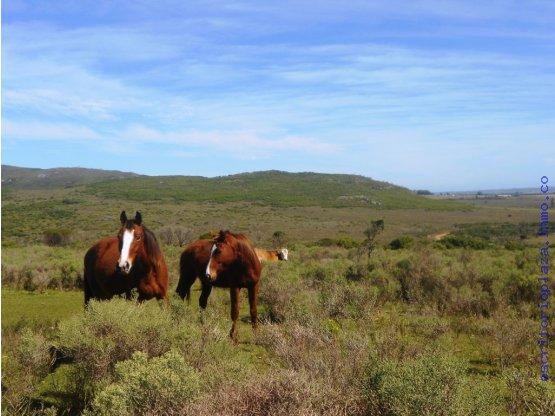 Campo en venta Lavalleja. 890 has con 4 cerros