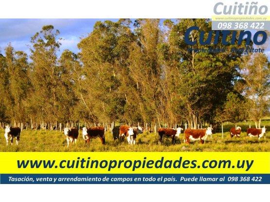 Campo en venta Lavalleja. 16 has. con arroyo