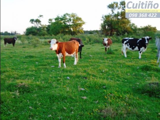 Campo 5 hectareas en Tala, Canelones