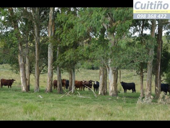 Campo 55 hectareas en Lavalleja