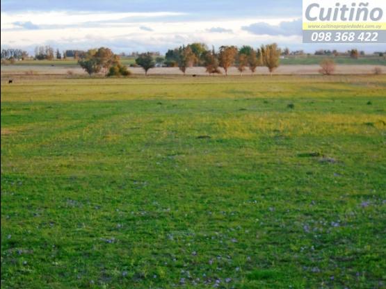Campo 6 y 1/2 hectareas con arroyo en Lavalleja