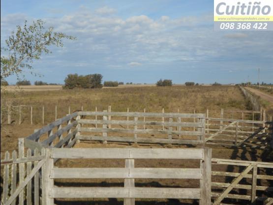 Campo 26 hectareas todo agricola en Lavalleja