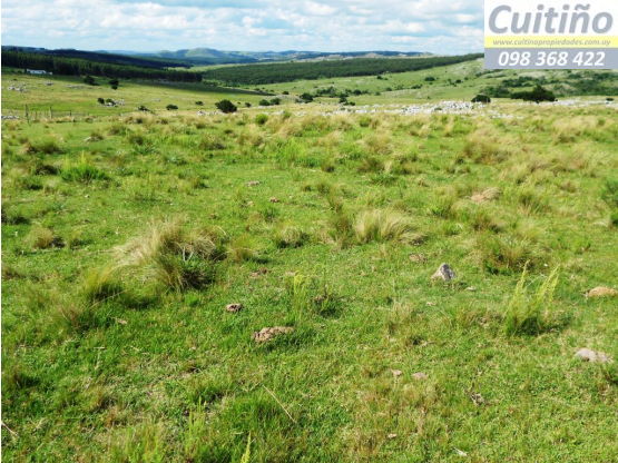 Campo 51 hectareas con manantial en Lavalleja