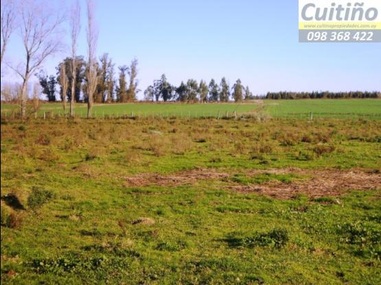 Campo 45 hectareas 100% agricola en Santa Rosa