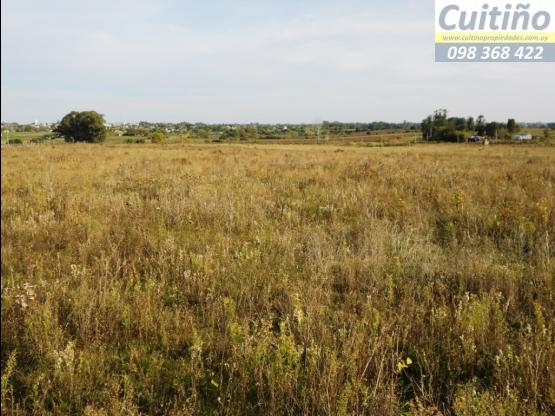 Campo 22 hectareas en Tala, ideal para fraccionar