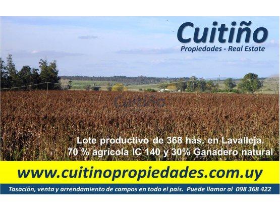 Lote productivo de 368 has. en Lavalleja