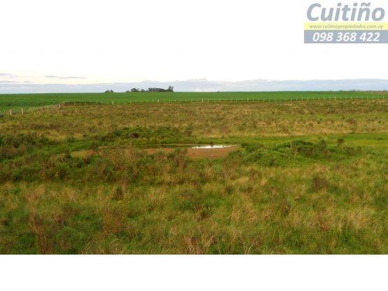 Campo en venta. 7 has. agricolas en Tala