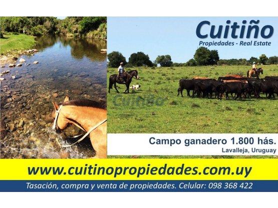 Campo en venta Lavalleja Uruguay. 1800 has.