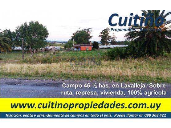 Campo 46 1/2 has. sobre ruta en Lavalleja