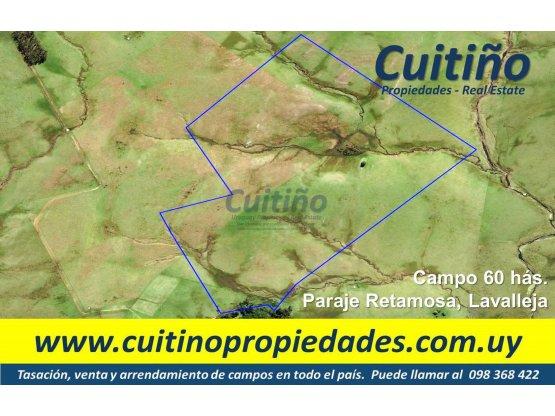 Campo 60 has. perfil ganadero forestal, Lavalleja