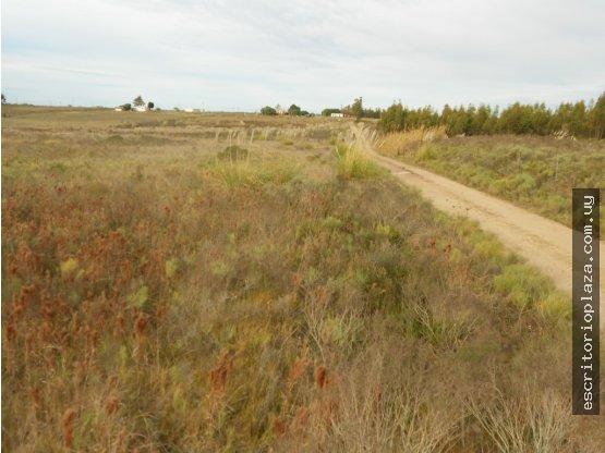 9 hás. a metros de ruta 7 en San Jacinto