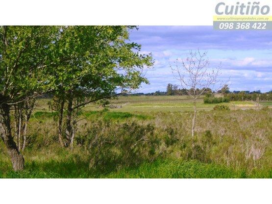 Terreno 1 hectarea en Tala, Canelones