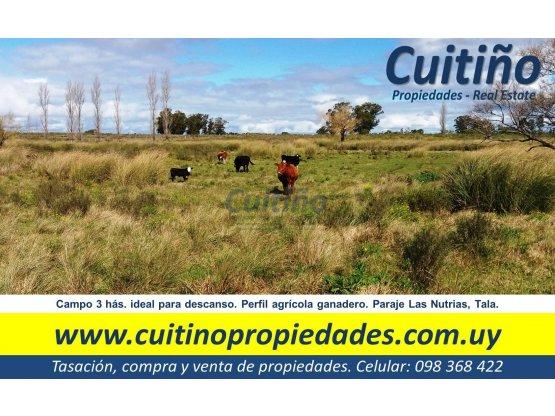 Campo 3 hectareas ideal para descanso