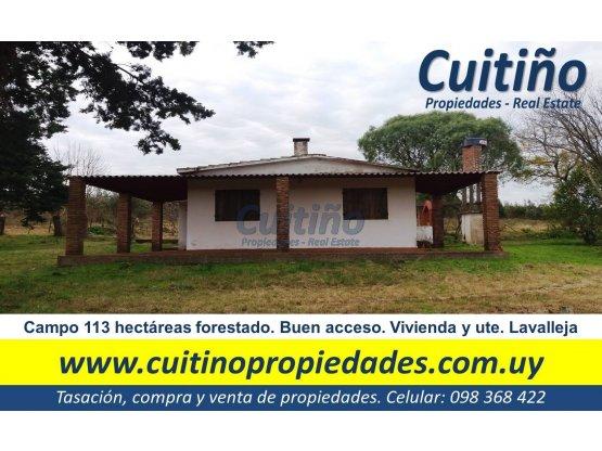 Campo 113 has forestacion eucaliptos en Lavalleja