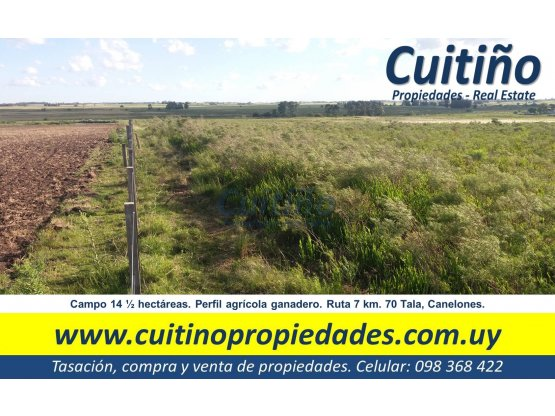 Campo 14 1/2 hectareas en Tala