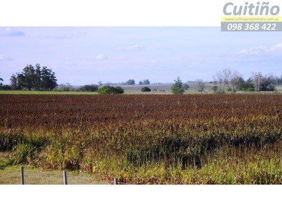 Campo en venta Lavalleja. 113 hás. agricola IC 140