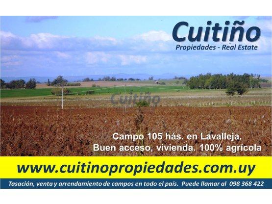 Campo en venta Lavalleja. 105 has. agricola IC 140