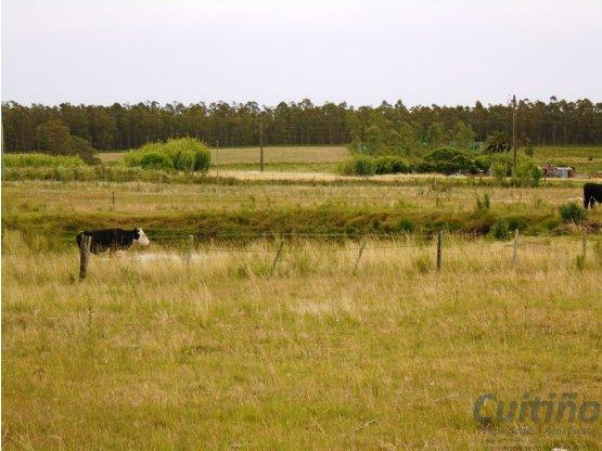 11 hectáreas agrícola sobre ruta. Financio 50%