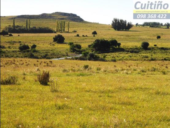 Campo 84 hectareas en Minas, Lavelleja