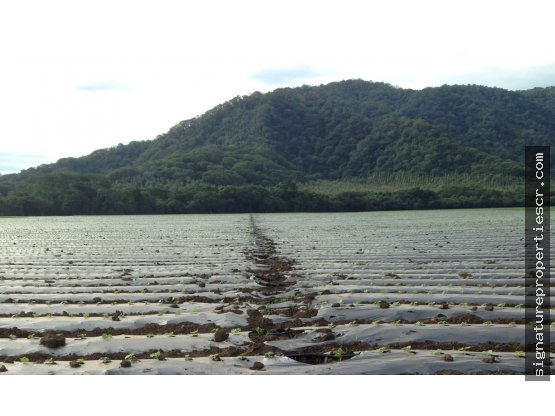 Finca ganadera Guanacaste, Nandayure