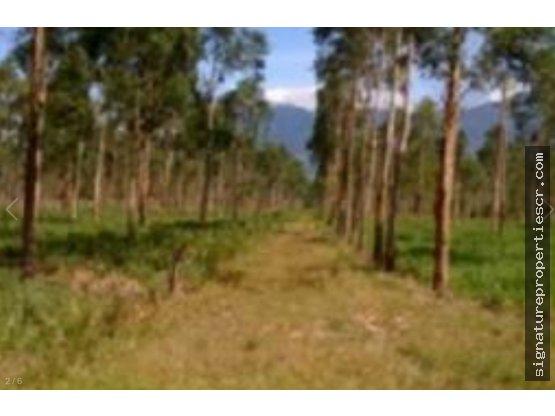 Finca ganadera y agrícola en Aguas Claras de Upala