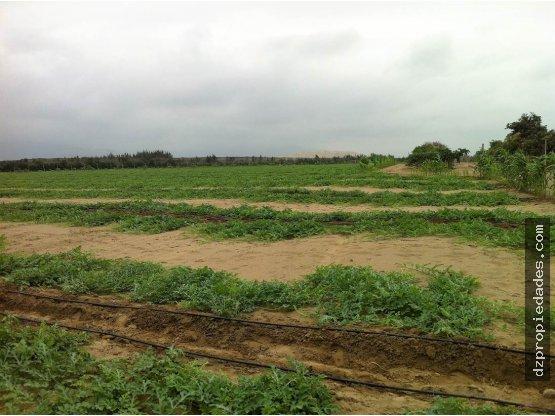 [EN VENTA] Lote de terreno en Virú