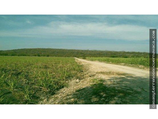 Atención Inversionistas: 500 hectáreas Tlatizapan