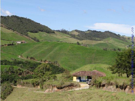 Finca en venta 137 cuadras la unión Antioquia