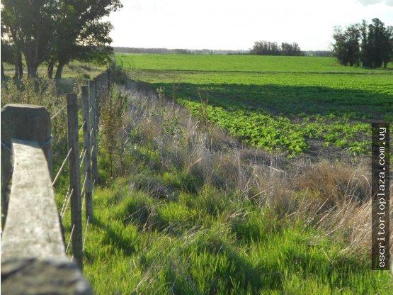 Campo en venta Lavalleja. 27 has agricola