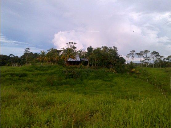 SE VENDE UN HERMOSO FUNDO EN YURIMAGUAS PERÚ