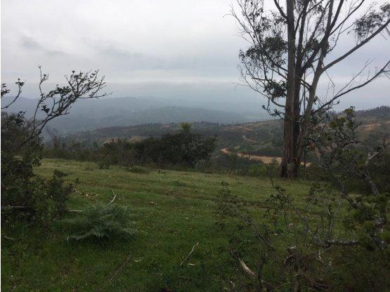 Sitio o Terreno Agrícola en Lo Venegas-San José
