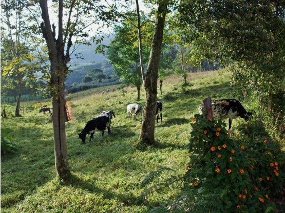 SE VENDE FINCA O LOTE EN SILVANIA,  AGUA BONITA