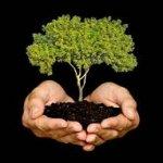 ley no24 reforestacion