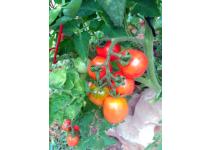 Aprovecha una pequeña parcela para hacer agricultura ecológica